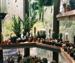 cacto, natureza, and plants image