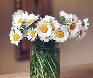 beautiful, bouquet, and daisy image