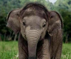 animal, elephant, and cute image