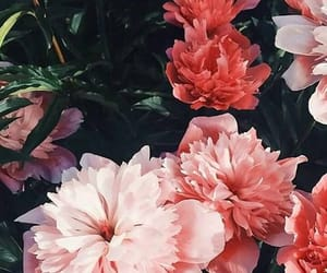 background, rosas, and flores image