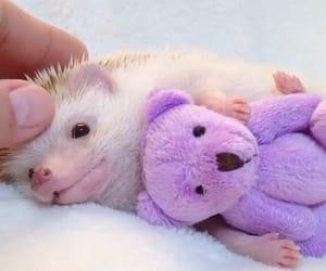 animals, bear, and cuddles image