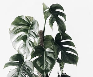 aesthetic, tropical, and greenery image