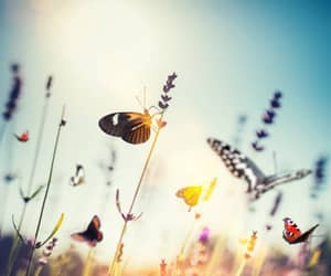 background, butterfly, and nature image