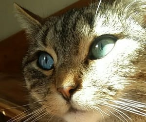 animals, pets, and cat image
