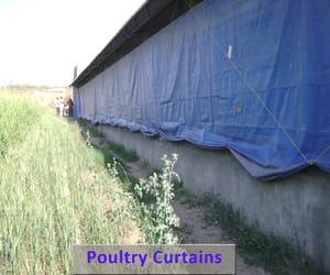 poultry curtains image