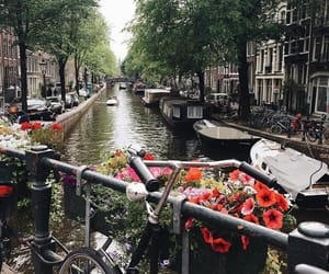 amsterdam, nature, and bicycle image