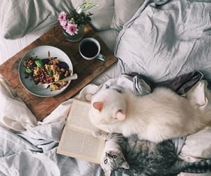 book, cat, and photo image