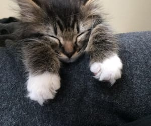 adorable, cat, and kitten image