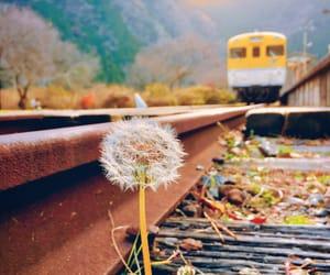 adventure, dandelion, and flower image