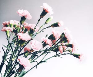 beautiful, flowers, and pink flowers image