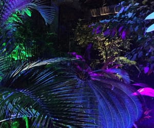 tropical and night image