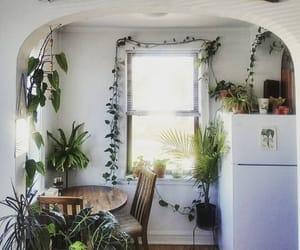plants, interior, and kitchen image