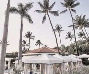 palm trees and travel image
