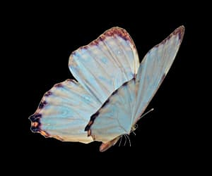 butterfly, overlay, and png image