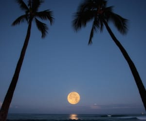 beach, moon, and night image