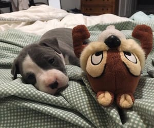 dog and puppy image