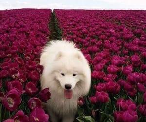 animals, fluffy, and beautiful image