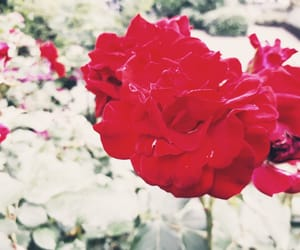 aesthetic, filter, and flowers image
