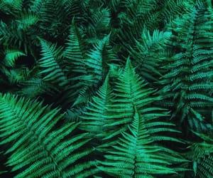 beautiful, fashion, and fern image