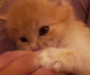 cat, kitten, and gif image