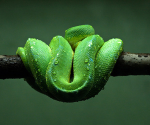 green, nature, and snake image