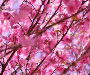 color, flower, and pink image