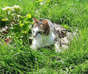 cat, french, and garden image