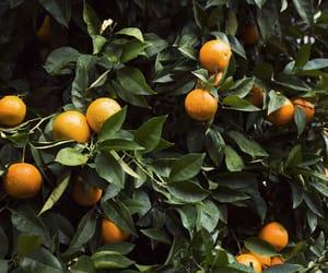 green, orange, and fruit image
