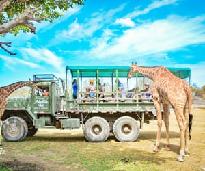 amazing, beauty, and giraffes image