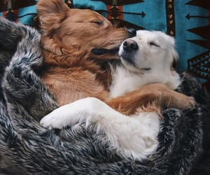 dog, cute, and love image