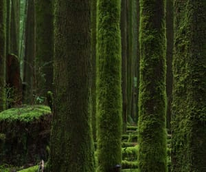 british columbia, canada, and forest image
