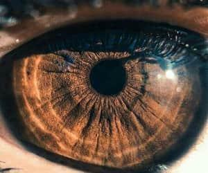 brown eyes image