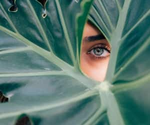 eyes, green, and photography image