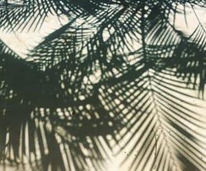 malibu, nature, and palm trees image
