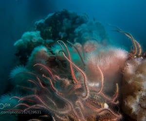 anemones, ocean, and sea image