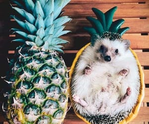 pineapple, animal, and fruit image