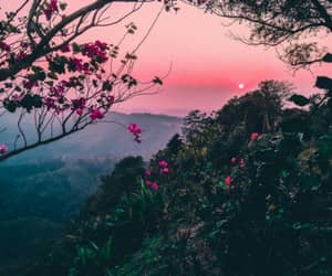 nature, sunset, and flowers image