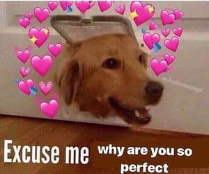 dog, gosh, and sweet image