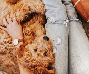 dog, jeans, and puppy image
