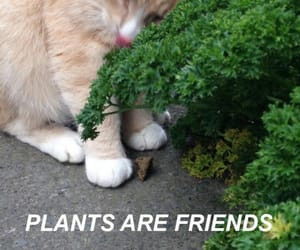 cat, plants, and friends image