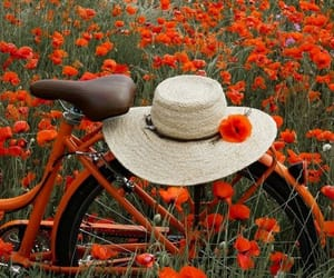 flowers and bicycle image
