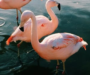flamingo, animal, and pink image