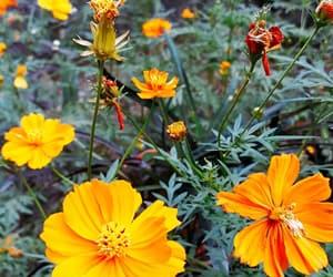 background, beautiful, and orange image