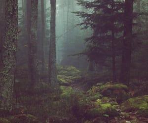 arvores, natureza, and floresta image