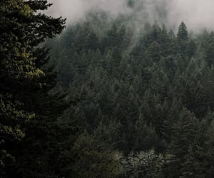 cool, forest, and green image