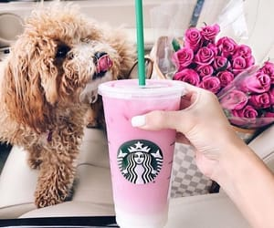 dog, animal, and starbucks image