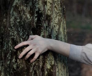 hand, tree, and aesthetic image