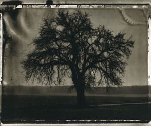 old, tree, and vintage image