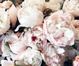 flowers, inspiration, and roses image