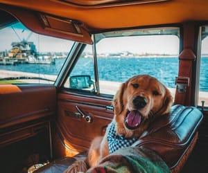 animal, travel, and animals image